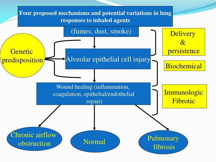 Four proposed mechanisms and potential variations in lung