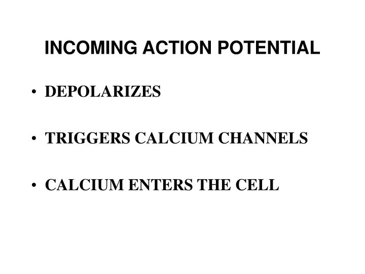 INCOMING ACTION POTENTIAL