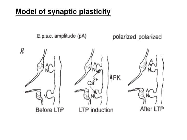 Model of synaptic plasticity