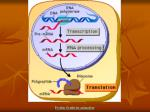protein synthesis animation