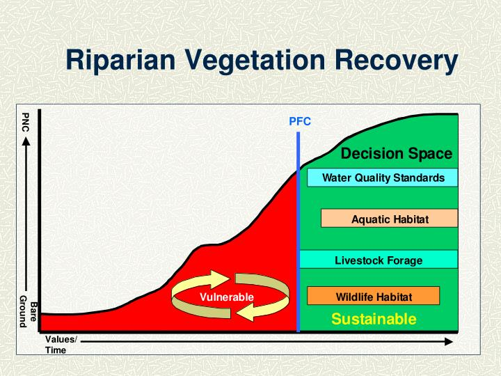 Riparian Vegetation Recovery