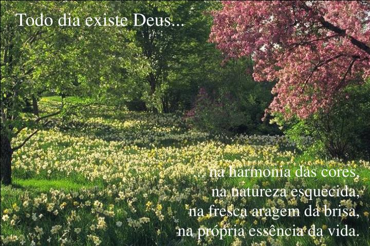 Todo dia existe Deus...