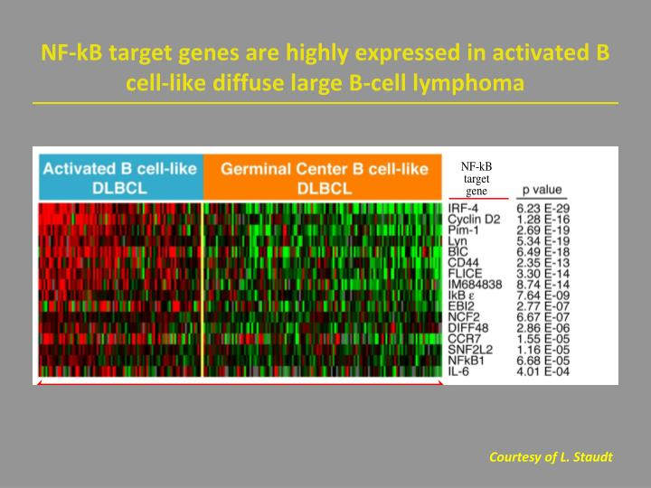 NF-kB target genes are highly expressed in activated B cell-like diffuse large B-cell lymphoma