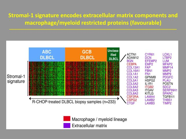 Stromal-1 signature encodes extracellular matrix components and macrophage/myeloid restricted proteins (favourable)