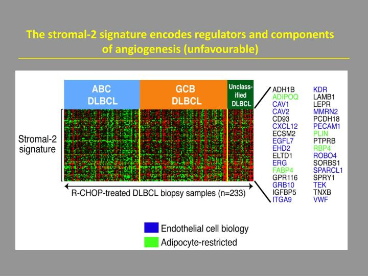 The stromal-2 signature encodes regulators and components of angiogenesis (unfavourable)