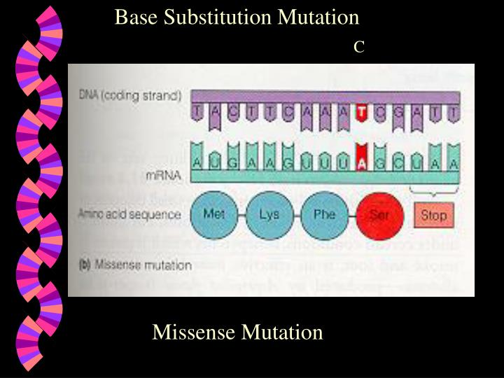 Base Substitution Mutation