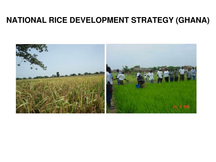 National rice development strategy ghana