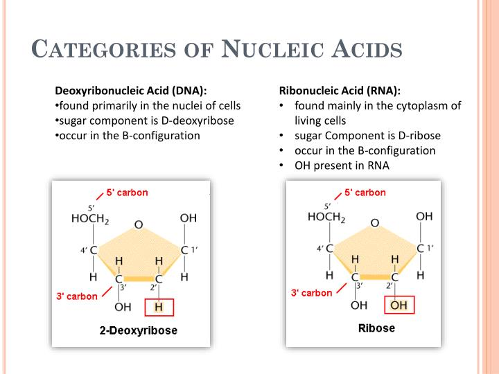 Categories of Nucleic Acids