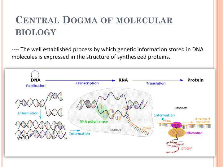 Central Dogma of molecular biology