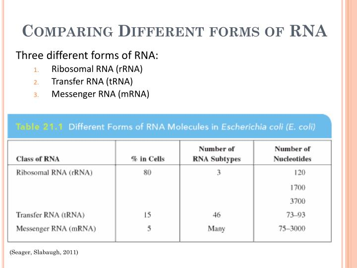 Comparing Different forms of RNA
