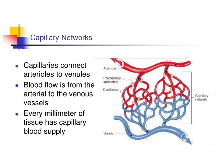 Capillary Networks