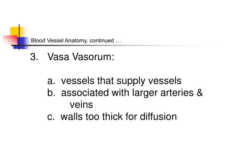 Blood Vessel Anatomy, continued …