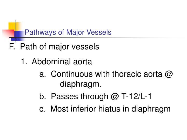 Pathways of Major Vessels