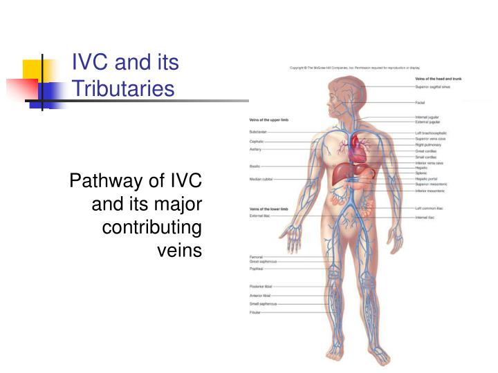 IVC and its Tributaries
