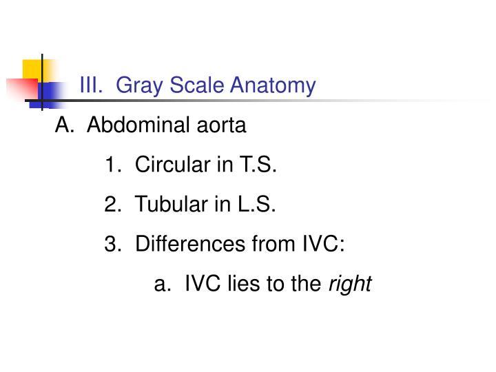 III.  Gray Scale Anatomy