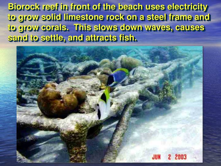 Biorock reef in front of the beach uses electricity to grow solid limestone rock on a steel frame and to grow corals.  This slows down waves, causes sand to settle, and attracts fish.