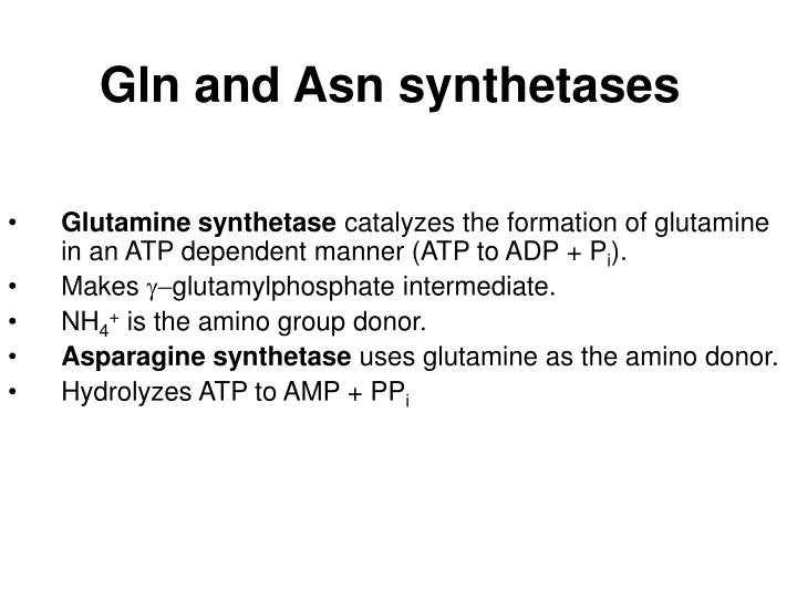 Gln and Asn synthetases