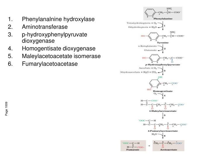 Phenylanalnine hydroxylase