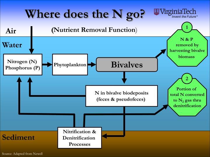 Where does the N go?