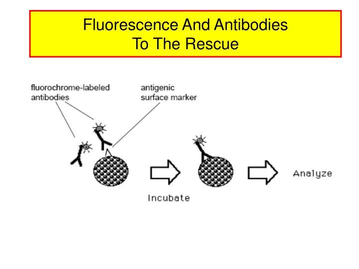 Fluorescence And Antibodies