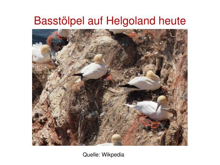 Basstölpel auf Helgoland heute