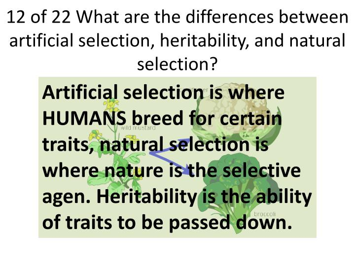 12 of 22 What are the differences between artificial selection, heritability, and natural selection?