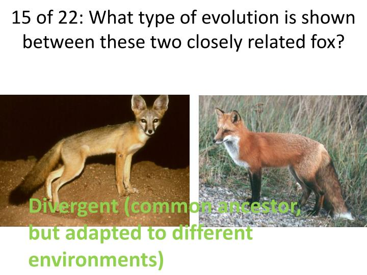 15 of 22: What type of evolution is shown between these two closely related fox?