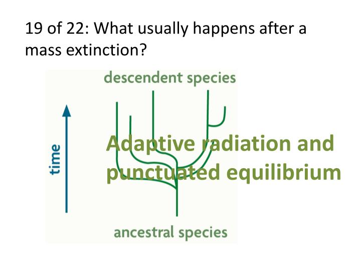 19 of 22: What usually happens after a mass extinction?
