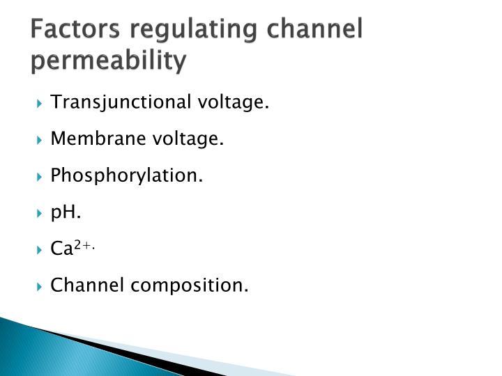 Factors regulating channel permeability