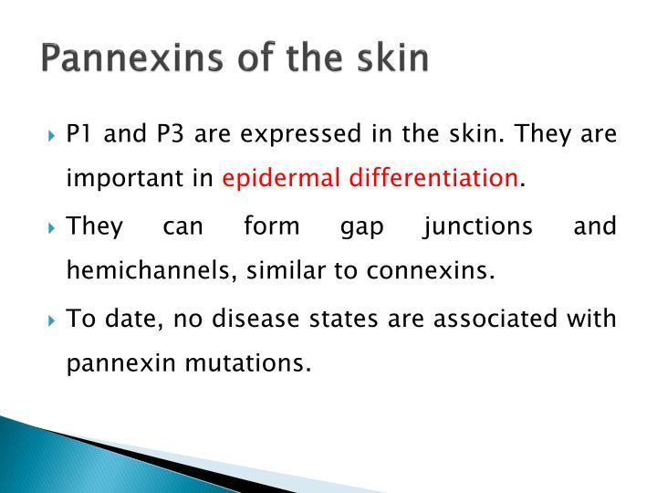 Pannexins