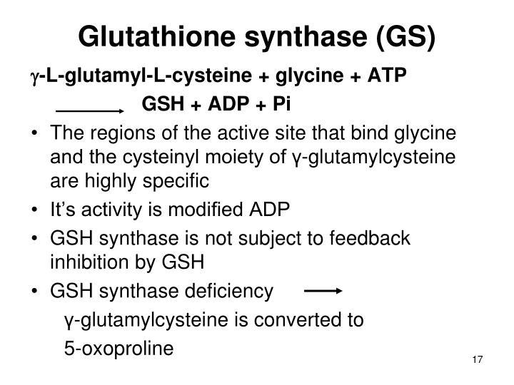 Glutathione synthase (GS)