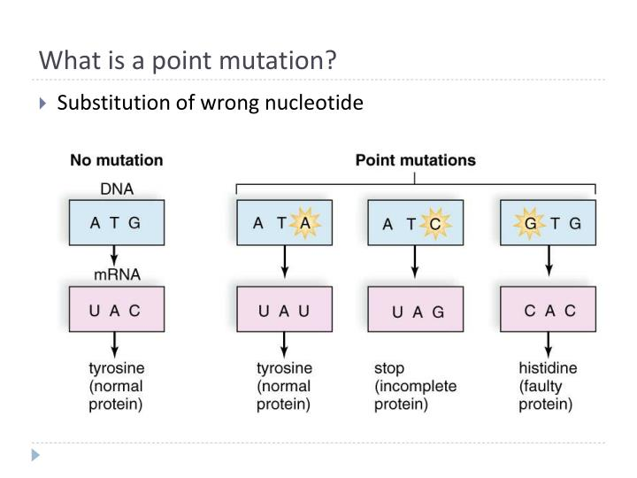 What is a point mutation?