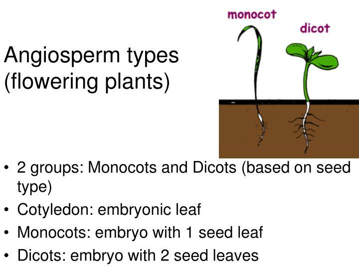 Angiosperm types