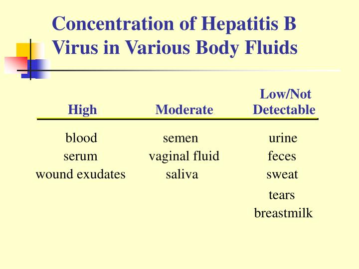 Concentration of Hepatitis B Virus in Various Body Fluids