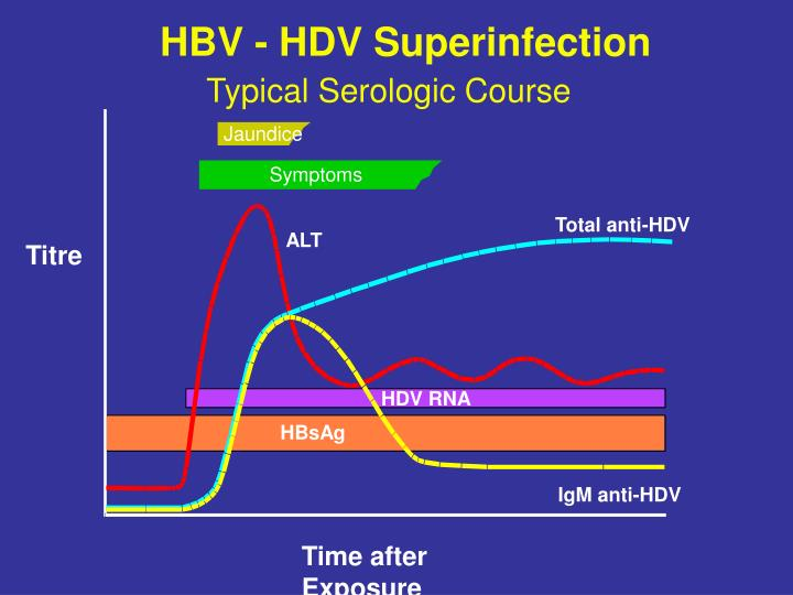 HBV - HDV Superinfection