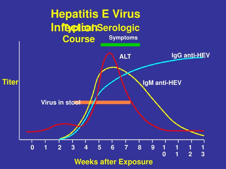 Hepatitis E Virus Infection