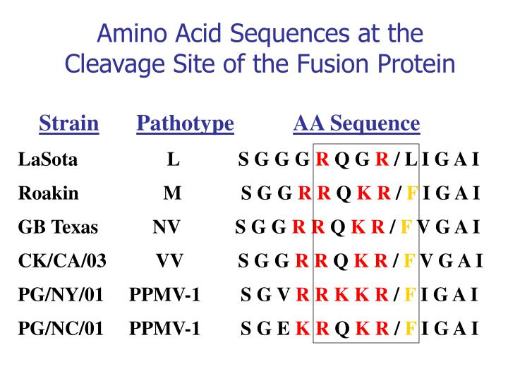 Amino Acid Sequences at the