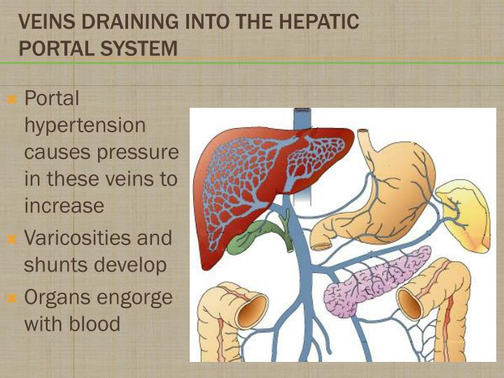 Portal hypertension causes pressure in these veins to increase
