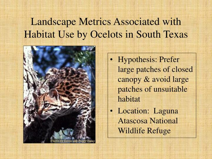 Landscape Metrics Associated with Habitat Use by Ocelots in South Texas
