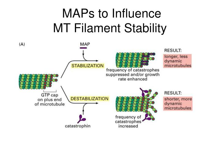 MAPs to Influence