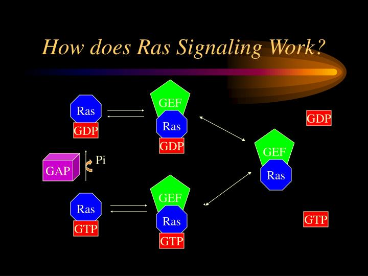 How does Ras Signaling Work?