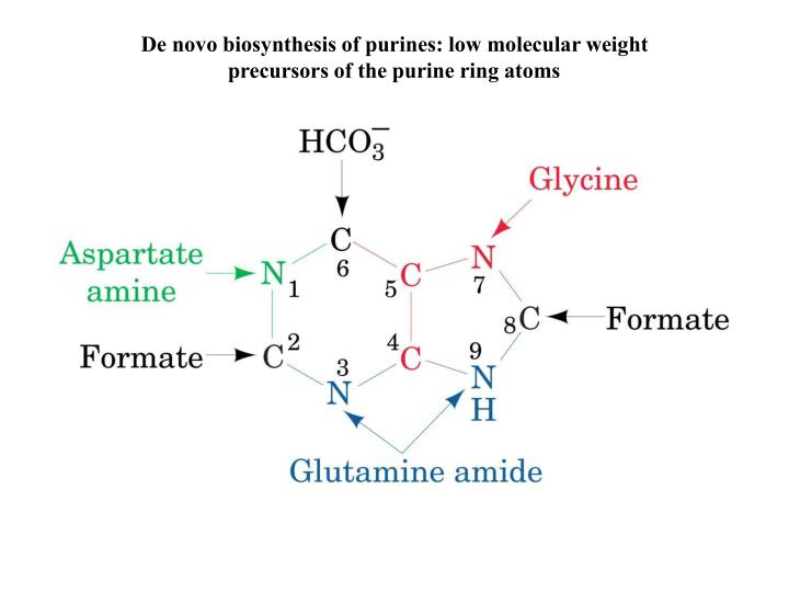 De novo biosynthesis of purines: low molecular weight precursors of the purine ring atoms