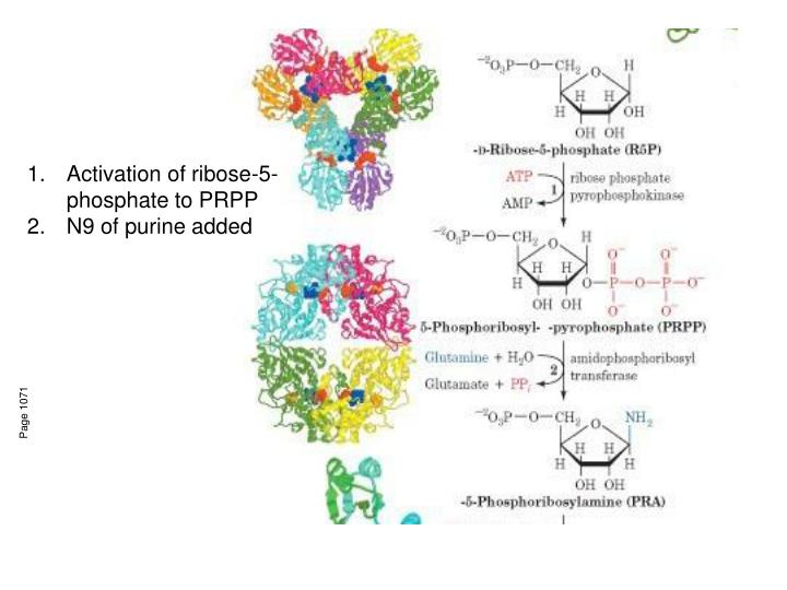 Activation of ribose-5-phosphate to PRPP
