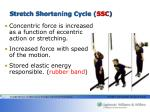 stretch shortening cycle ssc