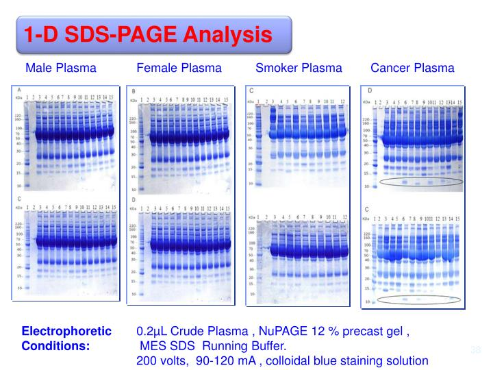 1-D SDS-PAGE Analysis