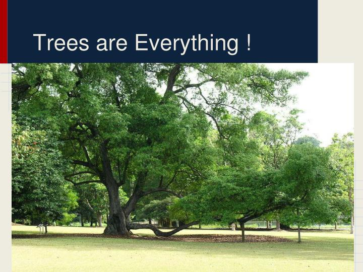 Trees are Everything !