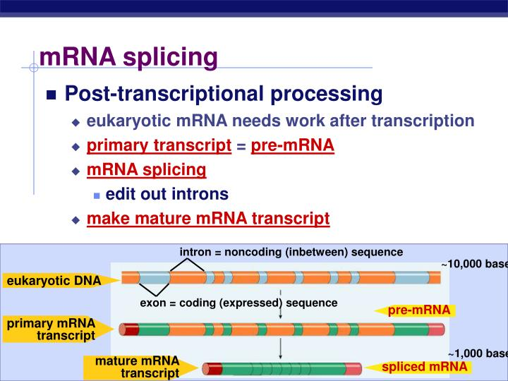intron = noncoding (inbetween) sequence