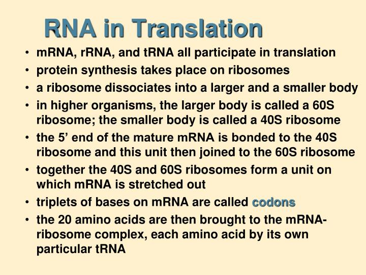 RNA in Translation
