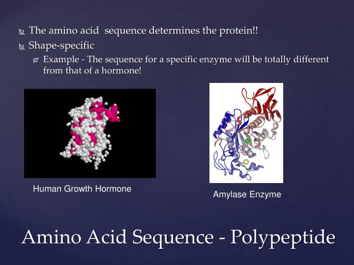 The amino acid  sequence determines the protein!!