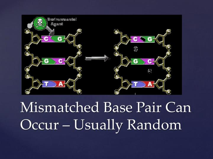 Mismatched Base Pair Can Occur – Usually Random